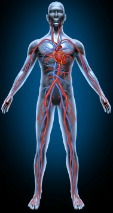 Reduce risk of blood clots in brain, blood clot on lung, in legs -- improve circulation.